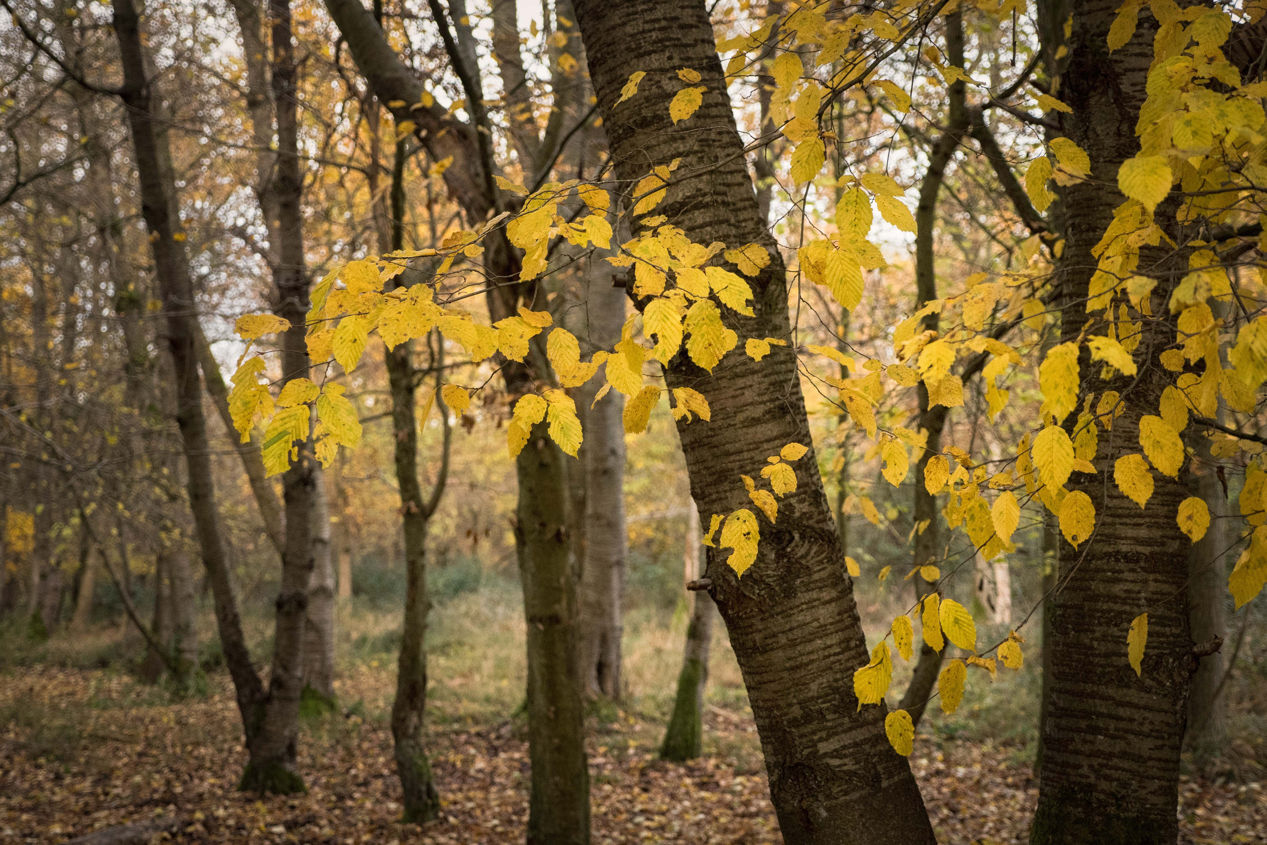 Autumn leaves are beautiful but they can also cause many problems for spouting and guttering.